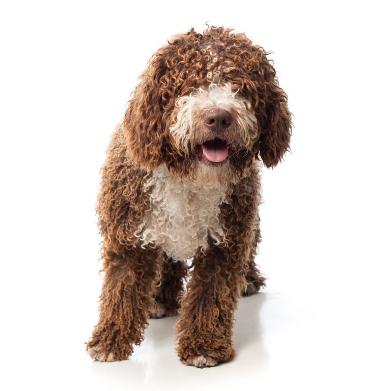 Pet Grooming Calera Animal Hospital Provides Pet Grooming For Dogs